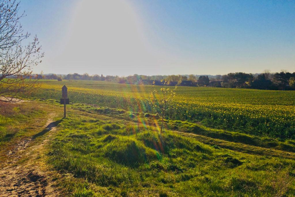 Mariendorf - Wanderweg über den Schafberg